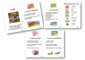 L'ours texte