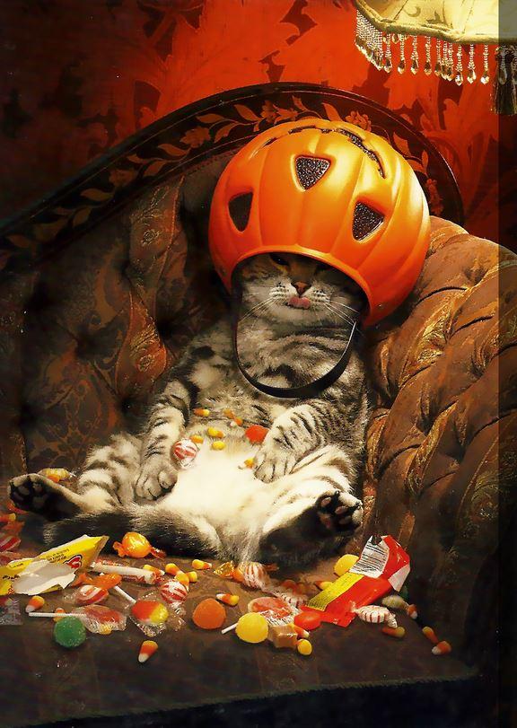 halloween-chat-bonbons-citrouille