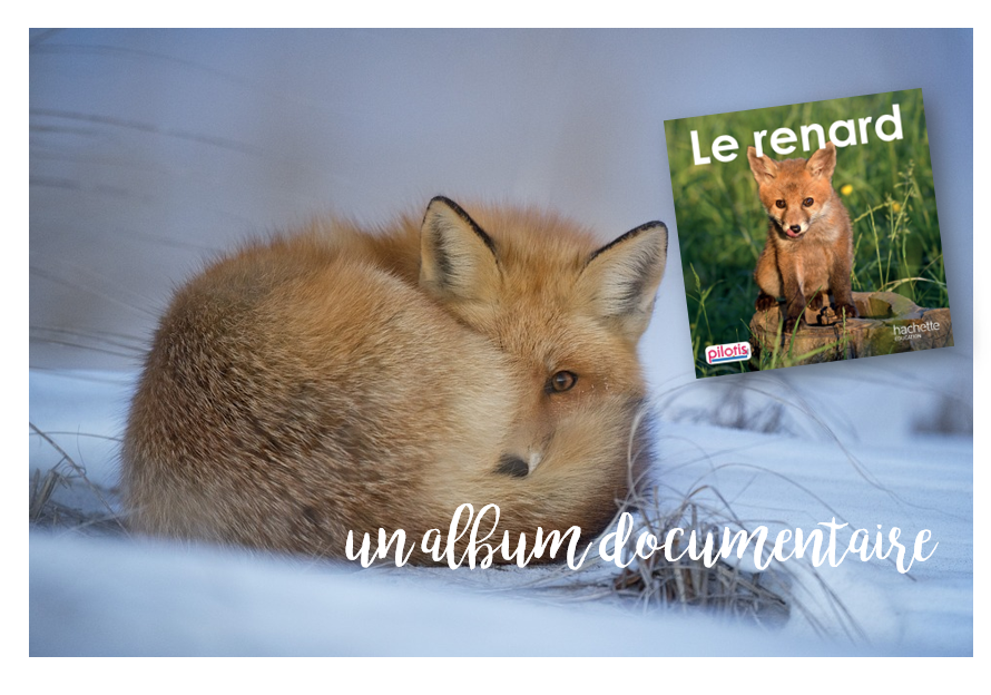 Le renard, un album documentaire