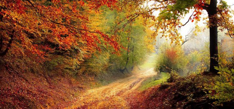 Quand automne en saison revient…